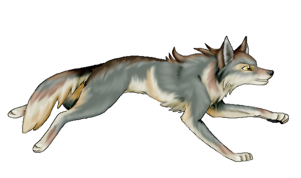 Un dessin de loup 2 - Image loup dessin ...